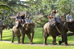 Elephant park & Safari ride